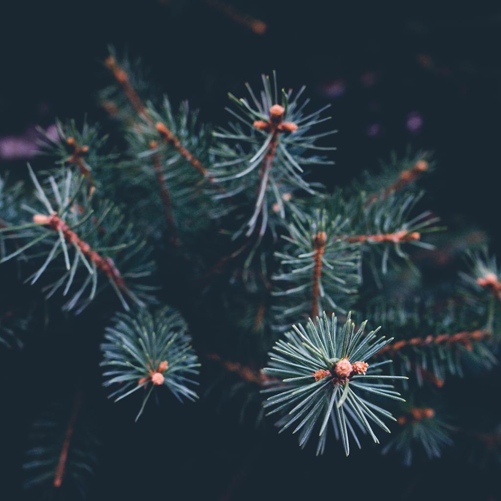 pine needles 5 Insane Christmas Food Facts lifesum